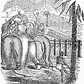 Taming Wild Elephants by Granger