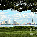 Tampa Skyline Through Old Oak by Carol Groenen