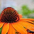 Tangerine Summer by Susan Herber