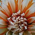 Tangerine Tinged by Susan Herber