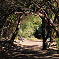 Tangled Arch by Judith Szantyr