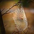 Tangled Web by Brenda Bryant