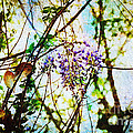 Tangled Wisteria by Andee Design