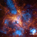 Tarantula Nebula 30 Doradus by NASA/Science Source