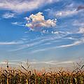 Tassels And Sky by Rachel Cohen