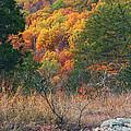 Taum Sauk Mountain Glade IIi by Greg Matchick