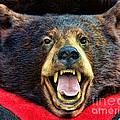 Taxidermy -  Black Bear by Paul Ward