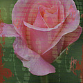 Tea Rose - Asia Series by Mary Machare