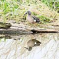 Teal Duck Standing On A Log by Lori Tordsen