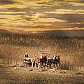 Team Of Four Horses by Randall Branham