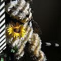 Teddy Bear by Lynnette Johns