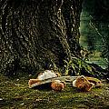 Teddy With A Saw by Joana Kruse