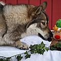 Tehya's Christmas by Amanda LeClerc