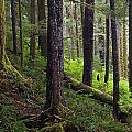Temperate Rain Forest, Carmanah-walbran by Mike Grandmailson