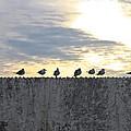 Ten Seagulls Stand On Top Of Stucco Wall by Chira Juti