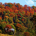Tennessee Fall by Ericamaxine Price