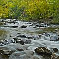Tennessee Stream 6031 by Michael Peychich