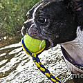 Tennis Ball Mist by Susan Herber