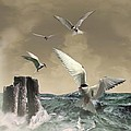 Terns In The Wind by IM Spadecaller