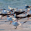 Terns by Stephen Whalen