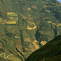 Terraced Fields Above Canyon Draining by Gordon Wiltsie