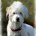 Terrier Dog Portrait by Michael Greenaway