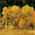 Teton Autumn Foliage by Greg Norrell