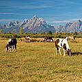 Teton Horses by Steve Stuller