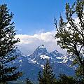 Teton Through The Trees by Douglas Barnett