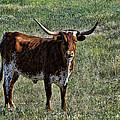 Texa Longhorn by Alan Hutchins