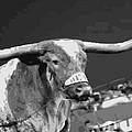 Texas Bevo Bw15 by Scott Kelley