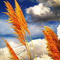 Texas Breeze by Steven Loyd