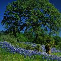 Texas Hill Country by Stan Williams