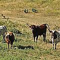 Texas Longhorns Panoramic by Alan Hutchins