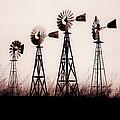 Texas Windmills by Tamyra Ayles