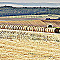 Textured Fields Of France by Lainie Wrightson