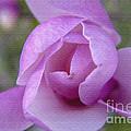 Textured Flowerr by Darleen Stry