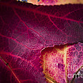 Textured Layers by Kim Henderson