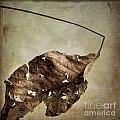 Textured Leaf by Bernard Jaubert