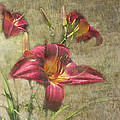 Textured Red Daylilies by Debbie Portwood