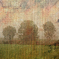 Textured Trees by Roni Chastain