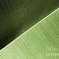 Patterns And Colors. Green. by Ausra Huntington nee Paulauskaite