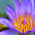 Thai Colours by Lyle Barker