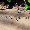 Thank Heaven For Little Girls by Debbi Granruth