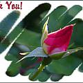 Thank You Bud by Kristin Elmquist