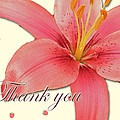 Thank You Card - Pink Lily by Mother Nature