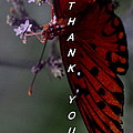 Thank You Card - Butterfly by Travis Truelove