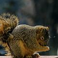 Thank You For The Nuts by LeeAnn McLaneGoetz McLaneGoetzStudioLLCcom
