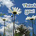 Thank You Greeting Card - Oxeye Daisy Wildflowers by Mother Nature