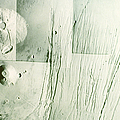 Tharsis Bulge by A.s.p.